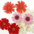 Beautiful arrangement flowers — Stock Photo