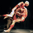 "Stock Photo: ""Body Worlds"" a traveling exhibition"