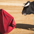 Bullfighter with the Cape in the Bullfight — Stock Photo