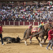 Drag mules are Bull died in the Bullfight to the slaughterhouse of the bullring of Ubeda — Stock Photo